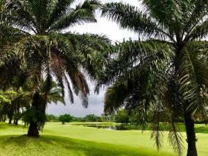 ゴルフ会員権の千葉ゴルフ会
